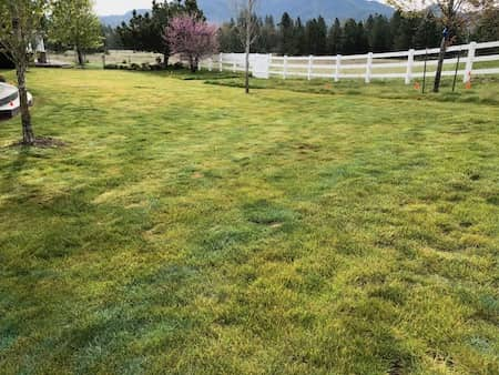 Landscaping With Sod In Rogue River